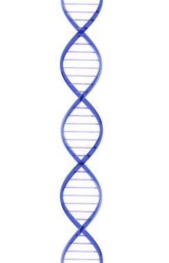 Glass DNA