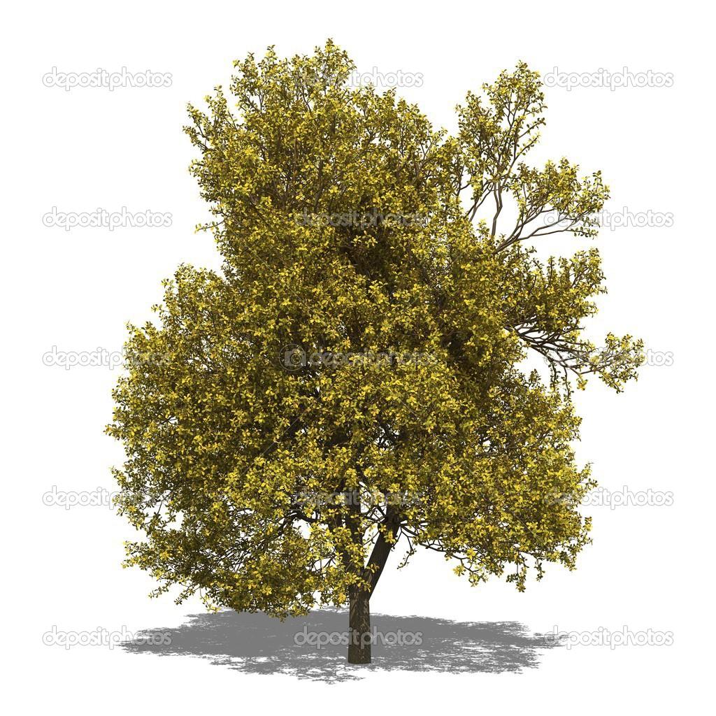 Quercus Robur Autumn Stockfoto C Suzi44 49777215