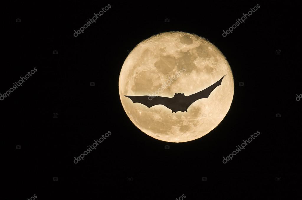 Flying bat in full moon