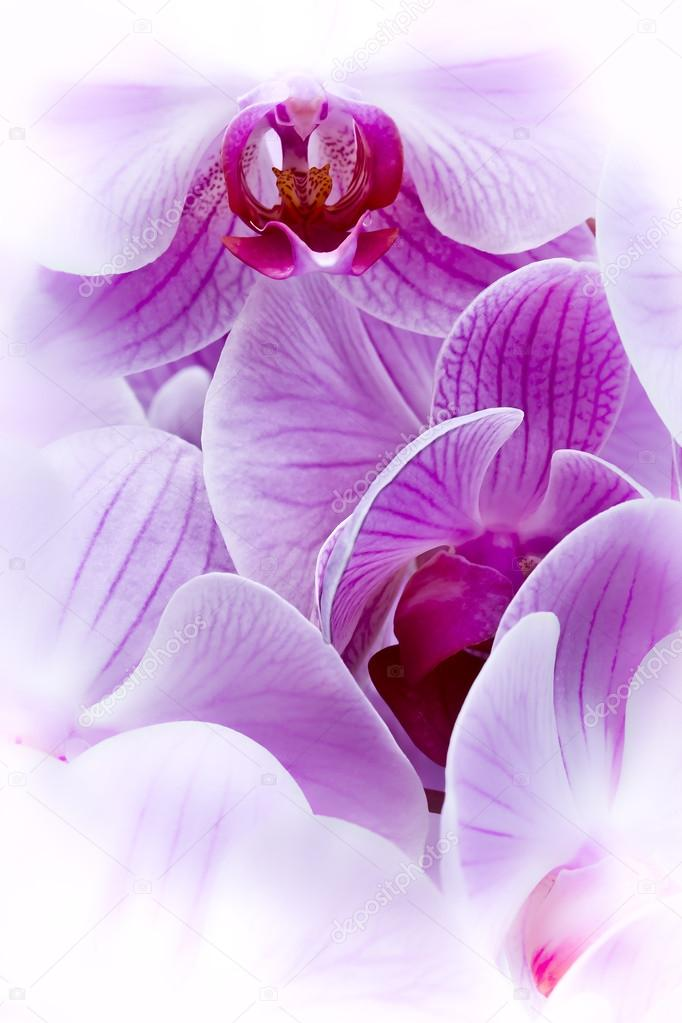 Artistic bouquet of purple orchid flowers
