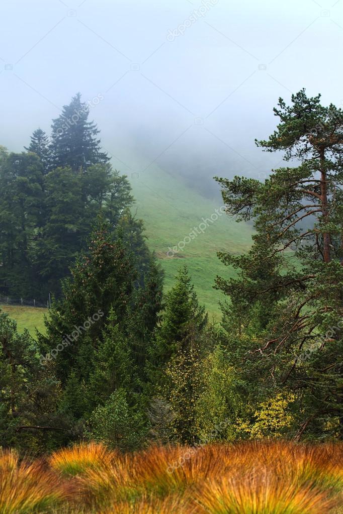 Melting pot of vegetation of peat bog in autumn, Lispach Vosges, France