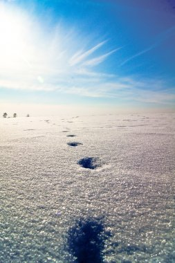 Way.путь, следы на снегу, footprints in the snow leading to the sun on a snow hill,around the trees