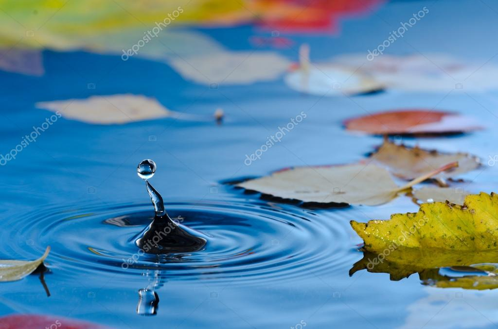Water droplet in pond with autumn leaves