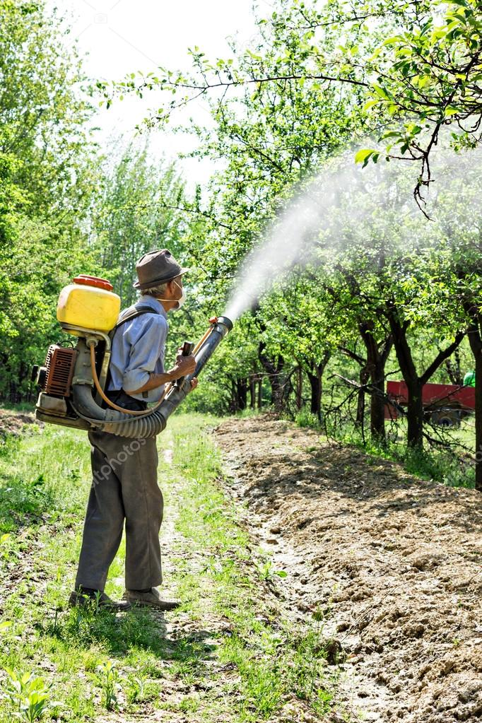 Old farmer spraying the trees