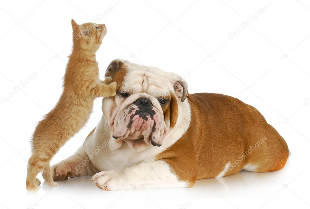 dog and cat playing stock photo willeecole 13799561. Black Bedroom Furniture Sets. Home Design Ideas