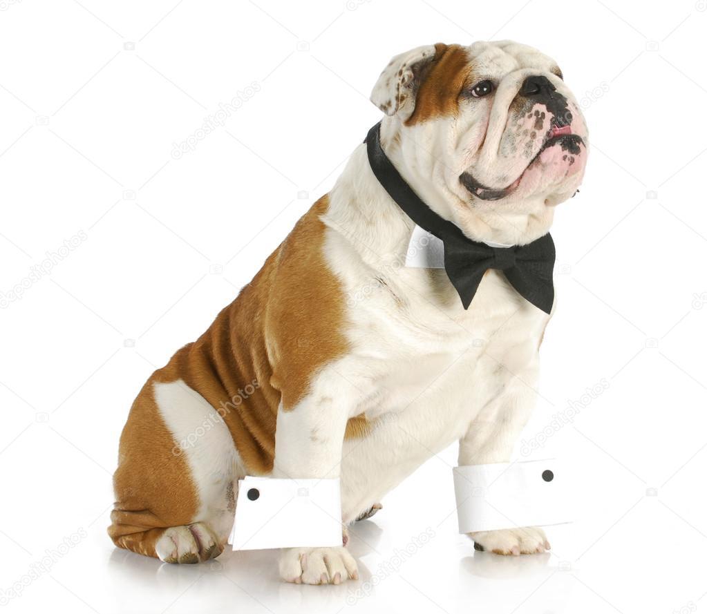 Male dog