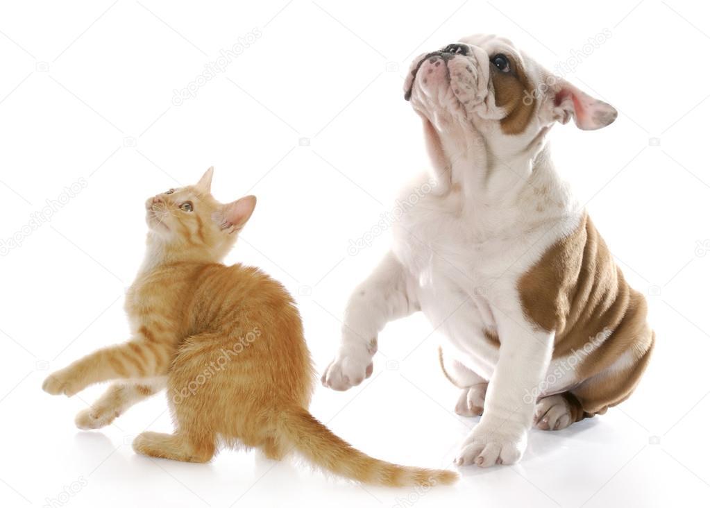 peur des chiens et chats — Photographie willeecole © #13820682