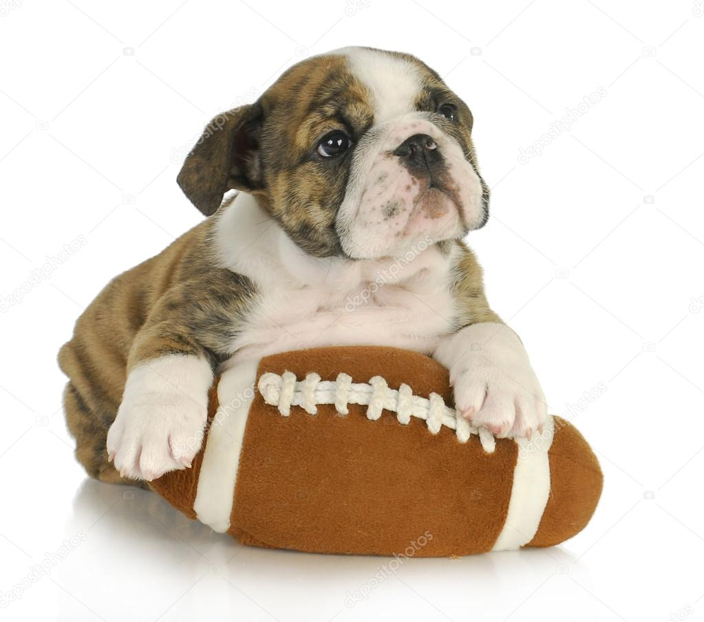 Cute Puppy With Stuffed Toy Stock Photo C Willeecole 13884935