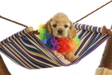 puppy vacation