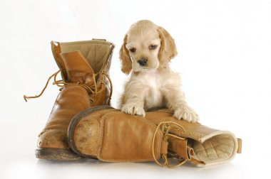 puppy with work boots