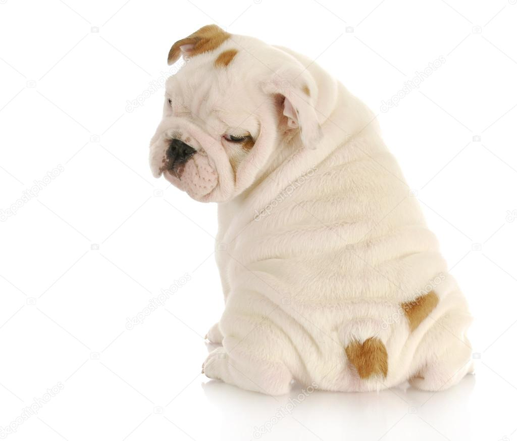 Cute Puppy Names For Small Dogs Boy