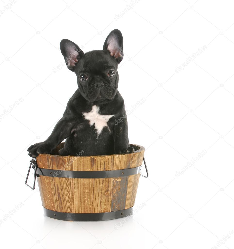 puppy sitting in wooden bucket