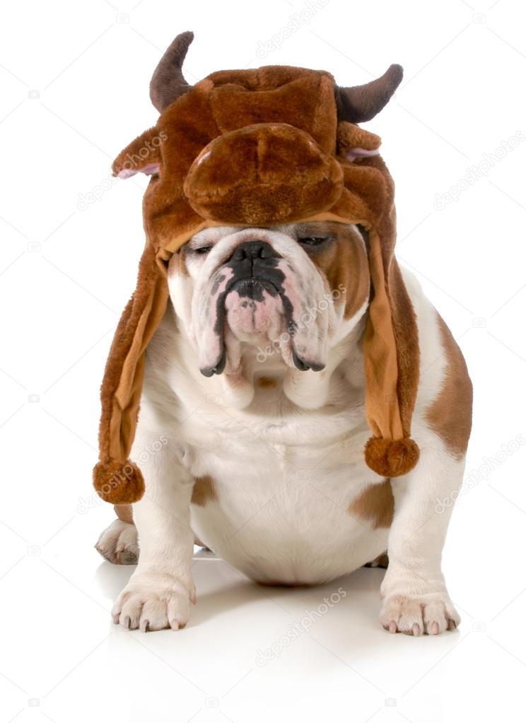 ¿ En SAN FERMINES todo vale? - Página 18 Depositphotos_20404981-stock-photo-bull-dog