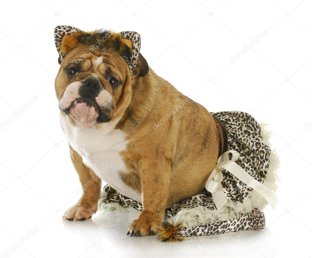 Pies Ubrany Jak Kot Zdjęcie Stockowe Willeecole 20724477