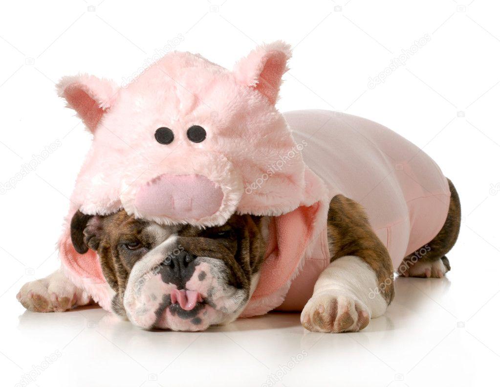 dog dressed up like a pig