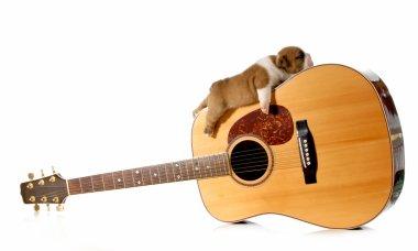 puppy sleeping on a guitar