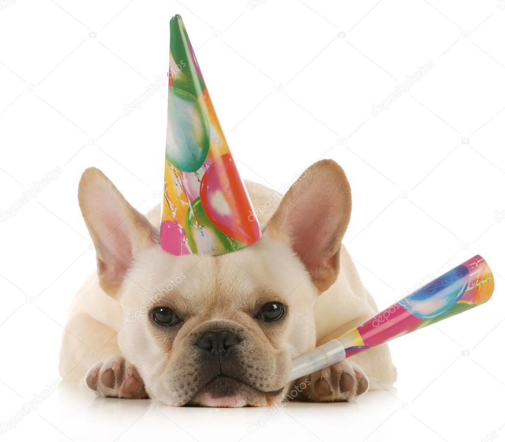 přání k narozeninám francouzsky narozenin — Stock Fotografie © willeecole #22878718 přání k narozeninám francouzsky