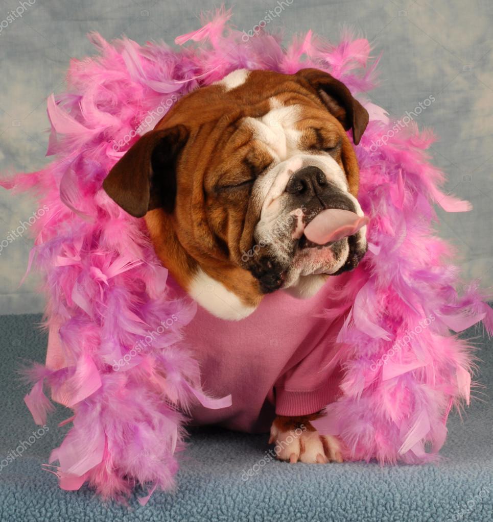 perro mimado con boa rosada y la lengua de fuera — Fotos de Stock ...