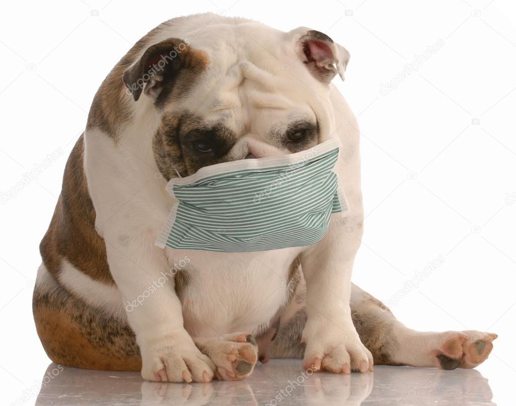 sick or contagious dog
