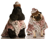 Dvě kamarádky pes oblečená v módní oblečení