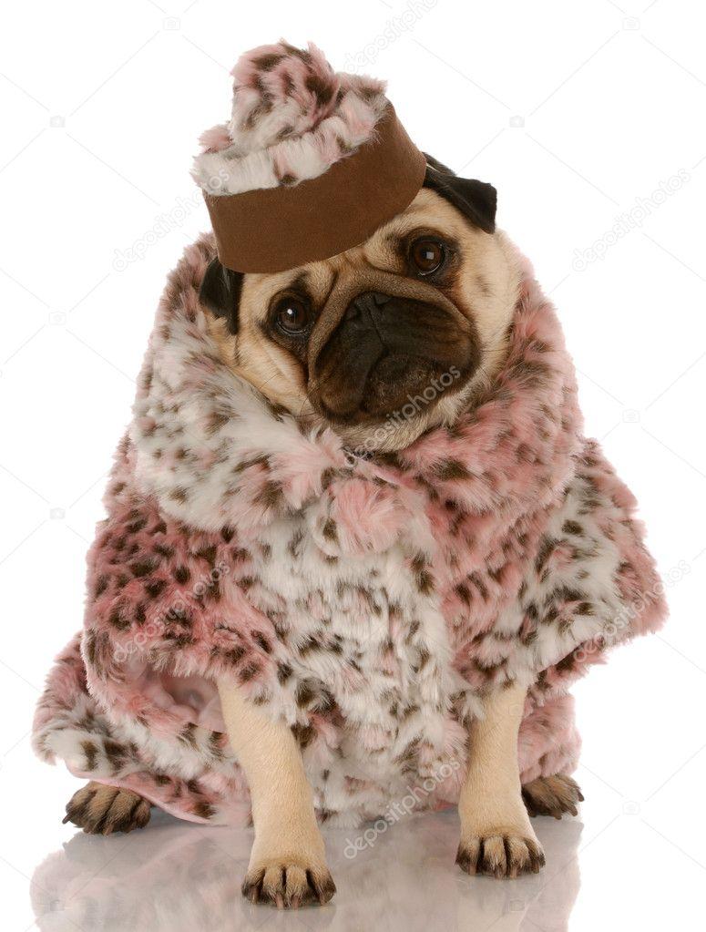 pug wearing leopard print fur coat and hat