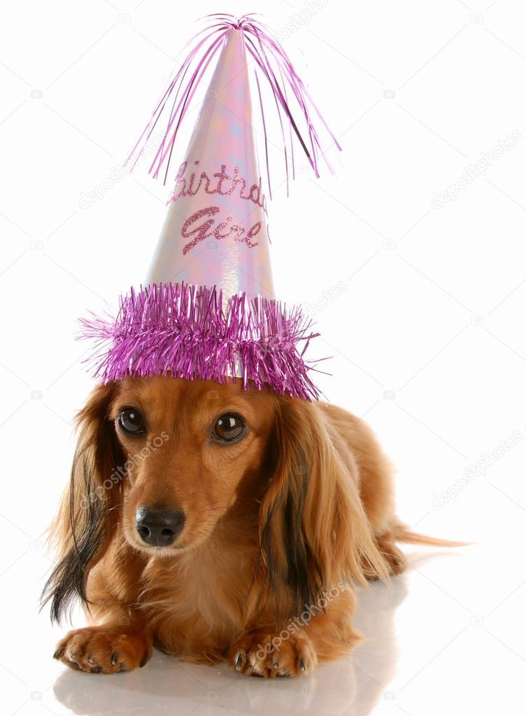 Adorable Dackel Geburtstag Madchen Hut Stockfoto C Willeecole