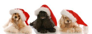three cocker spaniels wearing santa hats