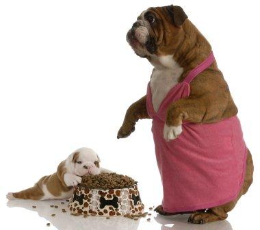 mother bulldog wearing pink dress standing beside puppy