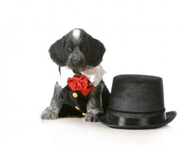 formal puppy