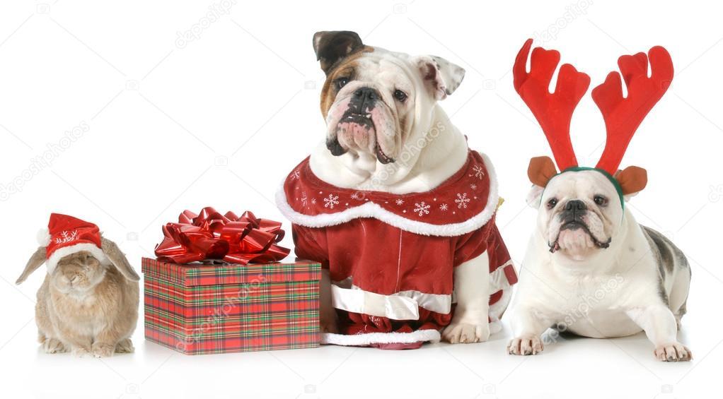 E sarà Natale. - Pagina 5 Depositphotos_37078749-stock-photo-christmas-pets
