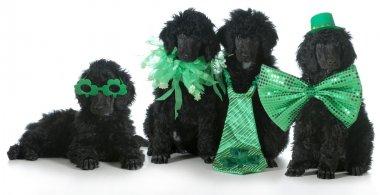 St. Patricks Day dogs