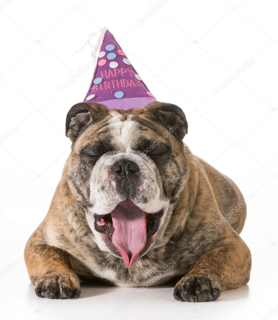 Verjaardag Honden Stockfoto C Willeecole 41555363