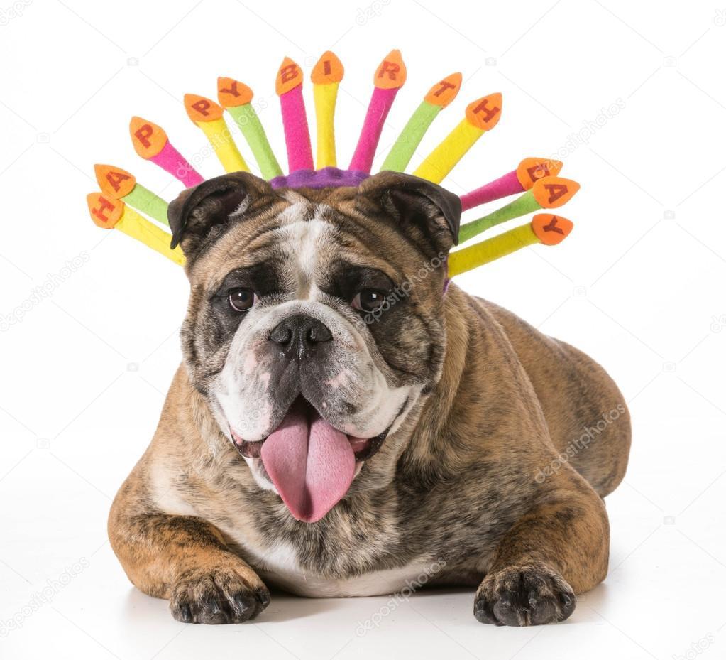 Verjaardag Honden Stockfoto C Willeecole 41558807