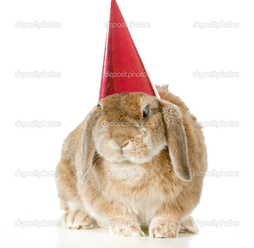 Geburtstag Hase Stockfoto C Willeecole 42570725