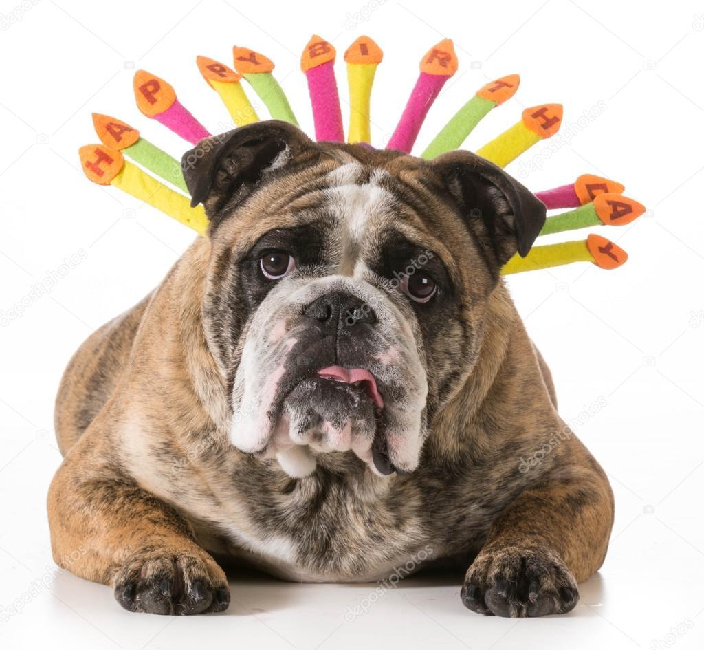 Verjaardag Honden Stockfoto C Willeecole 42570781