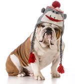 indossare cappello cane
