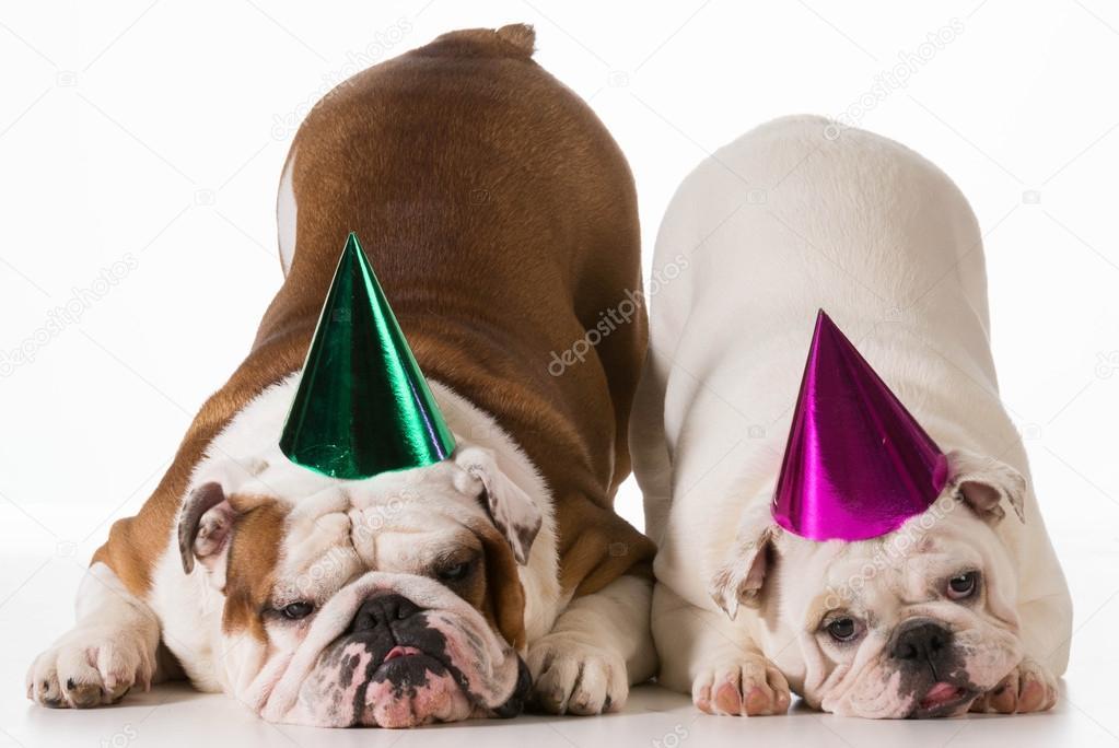 Geburtstag Hunde Stockfoto C Willeecole 49009651