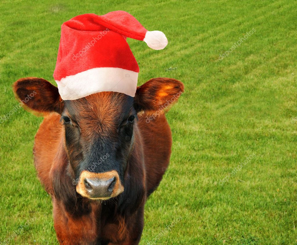 Cow in Santas hat.