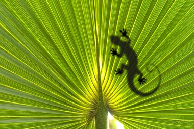 Lizard on leaf