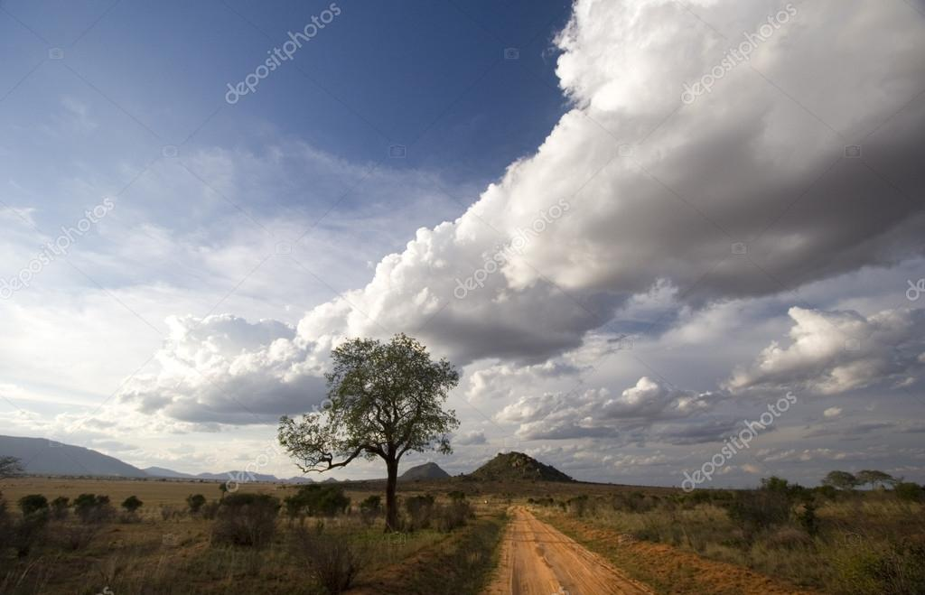 Red dirt track of Tsavo East, Kenya