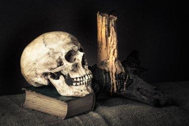still life skull