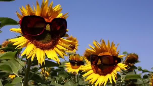 vtipné scény s slunečnice