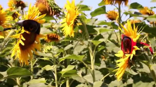 Funny scene with sunflowers