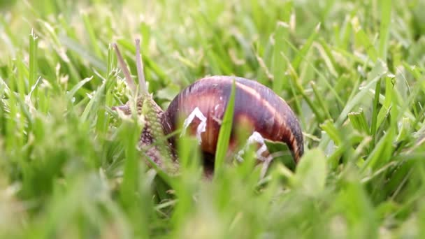 Close up of a snail with windows of its shell, real estate concept
