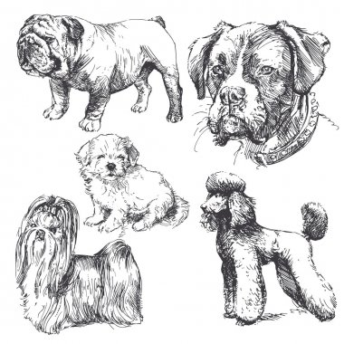Dogs - hand drawn collection