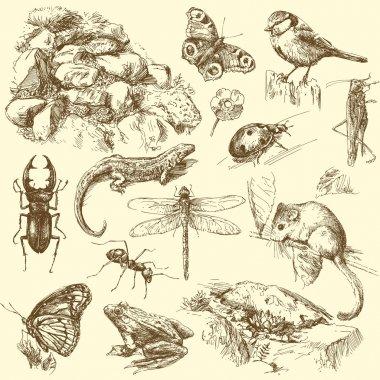 Garden animals, insect