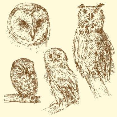 Hand drawn owls