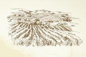 Fotografia paesaggio delle vigne - illustrazione disegnata a mano