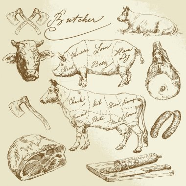 pork and beef cuts - hand drawn collection