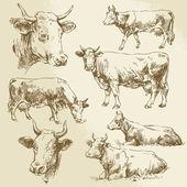 ručně kreslenou krávy